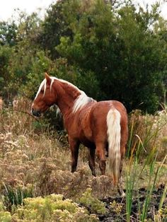 Wild Horses of NC Outerbanks Curly Horse, Island Horse, Legend Of Zelda Characters, Colonial America, Twilight Princess, Breath Of The Wild, Character Aesthetic, Horse Breeds, Wild Horses