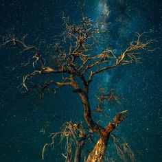 Tree in space...    Dead tree framed by the stars above in the Kalahari desert.    Camera Canon 5D Mk II  Lens Canon 16-35mm L
