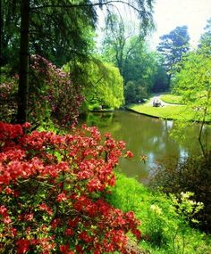 A woodland and bog garden, well-run by the City Council. Clyne Gardens contains varied National Collections of plants set in beautiful parkland, with features s Swansea Bay, Welsh Castles, Gower Peninsula, Bog Garden, Visit Wales, South Wales, Wales Uk, Public Garden, Heaven On Earth