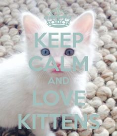 KEEP CALM AND LOVE KITTENS .
