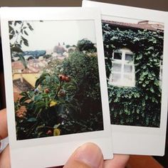 Took out Instax Mini 90 for a field trip Digital Photography, Photography Tips, Instax Mini 90, Travel Europe, Nature, Instagram, Naturaleza, Nature Illustration, Off Grid