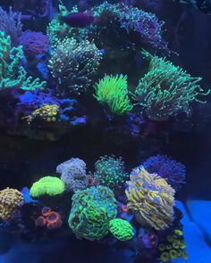 I know you guys love aquascapes but look at these corals! Coral Reef Aquarium, Saltwater Aquarium Fish, Tropical Fish Aquarium, Saltwater Tank, Marine Aquarium, Coral Reefs, Aquarium Screensaver, Video Nature, Coral Fish Tank