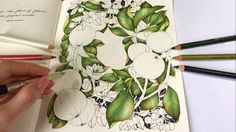 Crabapple - Part 1: Leaves Coloring | The Flower Year Coloring Book