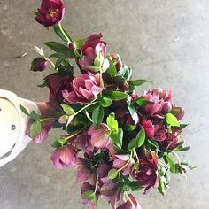 Happy Saturday flower friends! Bringing you back to #florabundanceinc  headquarters for a peek at these Amazing deep purple double hellebores. A bit limited  Which makes them even more special. #doublehellebores #hellebores #purplehellebores #flowersfromnewzealand #flowersfromallovertheworld #passionateaboutflowers