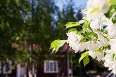 Varjakan Hulina, Oulunsalo, Kanttia2 Finland, Fruit, Projects, Plants, Log Projects, Blue Prints, Plant, Planets