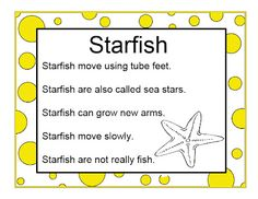 Brilliant Bundles: Preschool Starfish Activities for an Ocean Theme Beach Theme Preschool, Ocean Lesson Plans, Ocean Crafts, Sea Theme, Fish Theme, Facts About Starfish, Starfish Facts For Kids, Starfish Art, Ocean Activities