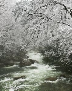 Great Smoky Mountains National Park, Gatlinburg, Tennessee. Chimney Trail right after about six inches of new snow.     .