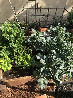 California Winter, Southern California, Winter Vegetables, Winter Garden, Plants, Sun Room, Planters, Plant, Indoor Greenhouse