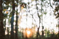 autumn light in the woods by Caterina Neri Photography on Autumn Lights, Bokeh Background, Cabins In The Woods, September, Christmas Tree, Holiday Decor, Flowers, Plants, Photography