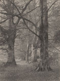 Frederick H. Evans | A Glade in the New Forest | 1891