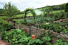 Kitchen vegetable garden enclosed by a wattle fence and bordered by rhubarb jardin potager bauerngarten