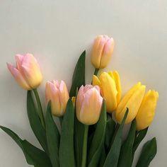 No Rain No Flowers, My Flower, Wild Flowers, Beautiful Flowers, Pastel Flowers, Pastel Colors, Spring Aesthetic, Flower Aesthetic, Plants Are Friends
