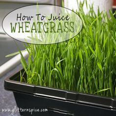 So, you bought a flat of wheatgrass or grew your own from seed, now what? I am going to assume you have heard all about the amazing health claims of wheatgrass and are here because you want to know how to get started harnessing the powerful benefits of wheatgrass, but... Continue reading