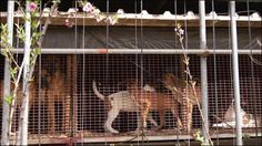 Petition · S. Korea! Stop construction of large scale illegal dog farm and crack down on existing dog farms! · Change.org