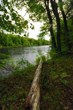 East Fork of the Black River | Visit 289 | Wisconsin State Natural Area 612 | Black River State Forest | Jackson County | https://wisconsinstatenaturalareas.com/2016/10/10/east-fork-of-the-black-river/ | #wisconsin #wisconsinstatenaturalarea #wisconsindnr #eastforkoftheblackriver #stateforest #blackriverstateforest #forest #jacksoncounty #wisconsinstateforest #conservation #wisconservation #discoverwisconsin #travelwi #wistatejournal #rei #explore #oldgrowth #eastandwestandnorthandsouth
