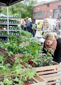 Kotipuutarha VERSOOo 2016 Plants, Plant, Planets