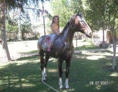 Big Horse Statue