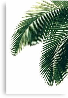 Nature design poster plants 24 ideas for 2019 Tropical Home Decor, Tropical Colors, Tropical Houses, Tropical Leaves, Tropical Furniture, Tropical Interior, Iphone Wallpaper Tropical, Tree Wallpaper Iphone, Green Wallpaper
