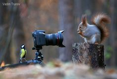 Squirrel teach me to take pictures! by vadimtrunov #animals #pets #fadighanemmd