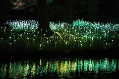 Bruce Munro's stunning LED Installations light up Longwood Gardens