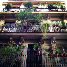 Loving the green in La Rambla, Barcelona