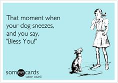 Ecard joke for you and your dog. Do you say bless you when your dog sneezes? Dog sneezes are like human sneezes and all should be blessed with love. Dog Quotes, Funny Quotes, Crazy Quotes, I Love Dogs, Puppy Love, Dog Sneezing, Mans Best Friend, Dog Mom, Dog Life