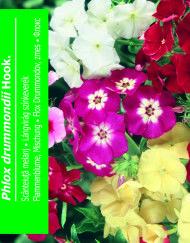 Øvrige Blomster – Side 10 – Bjarne's frø og planter