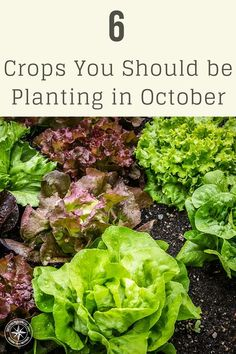 6 Crops You Should be Planting in October - Keep in mind that anything you plant in October is being planted for over-wintering. Don't expect much of a harvest this fall.