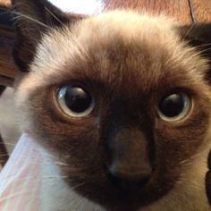 Big blue eyes, kitten cat cute