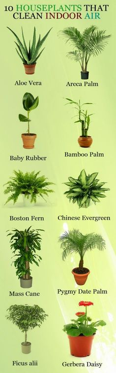 Spruce up your home while cleaning it - effortlessly! Repin this graphic to know which plants you can add to your household to clean your indoor air!