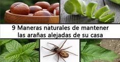 Como repeler a las arañas de manera natural, sin hacerles daño y sin exponer a nuestra familia a productos químicos peligrosos para nuestra salud.
