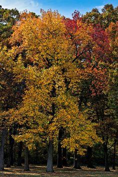 National Arboretum DC - 2009