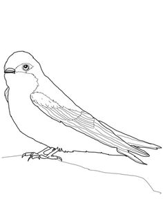 bird coloring pages for burgess