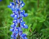 Bluebonnets - Jasper, Texas - ©pixelstarphotography.com