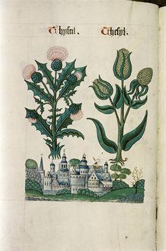 Tudor Herbal,1520