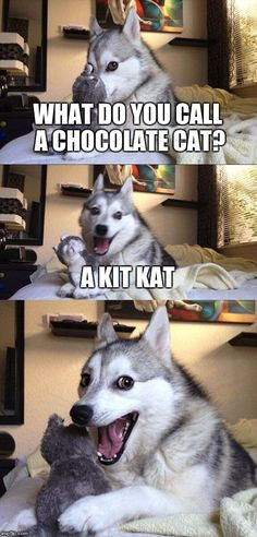 Bad Pun Dog | WHAT DO YOU CALL A CHOCOLATE CAT? A KIT KAT | image tagged in memes,bad pun dog | made w/ Imgflip meme maker