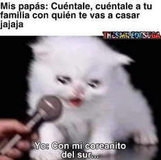 Funny Spanish Memes, Spanish Humor, Funny Jokes, Mexican Memes, Kpop Memes, Best Memes, Really Funny, Funny Photos, I Laughed
