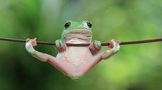 Žába si z větvičky udělala hrazdu.