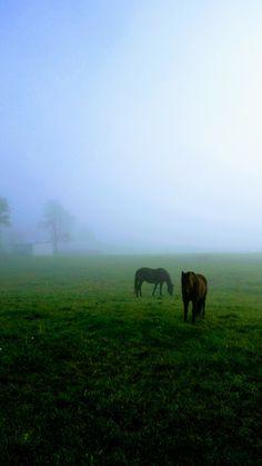 Horses in the fog. #horses