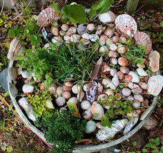 Seashell garden