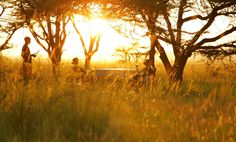 Imagine the wildest part of #Africa on one of our luxury safari; #Sun-downer in Masai Mara, #Kenya. photo by  Rekero Camp