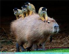 The Cutest Interspecies Animal Friendships.