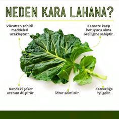 Karalahana☘☘✅ #sağlık #doğrubeslenme #beslenme #zayıflama #kiloverme #metabolizma #health #fit #spor