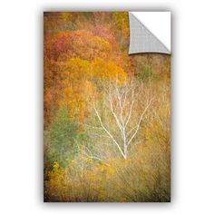 ArtWall Antonio Raggio ' In Autumn ' Art Appealz Removable Wall Art, Size: 24 x 36, Green