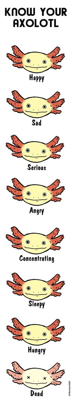 Know your axolotl by Morrison3000.deviantart.com on @DeviantArt