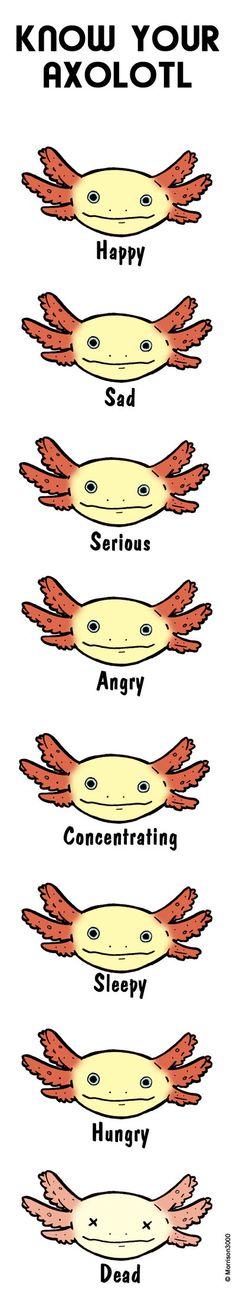 Know your axolotl by Morrison3000.deviantart.com on @DeviantArt