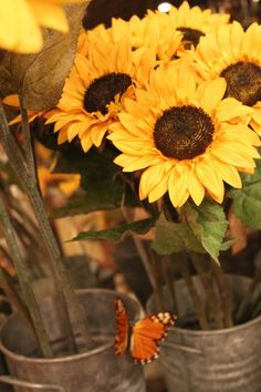 Sunflowers. One of my favorites. Simple, beautiful and rustic