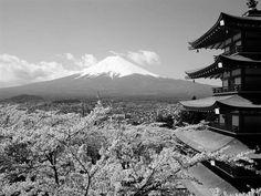Черно белое изображение сакуры, пагоды и горы Фудзи. Вариант 2