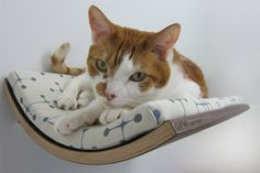I love these modern curved cat beds. Mid-century stylin'.