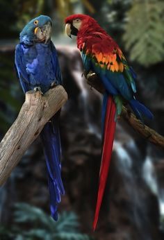 Eye-Catching Parrot Species May Make Endangered Species List